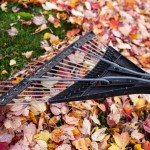 How to Avoid Back Strain While Raking Leaves This Fall