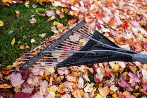 Avoid Back Strain While Raking Leaves with Total Chiro